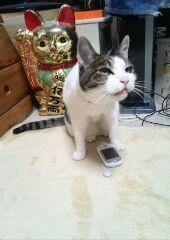 みのる携帯2