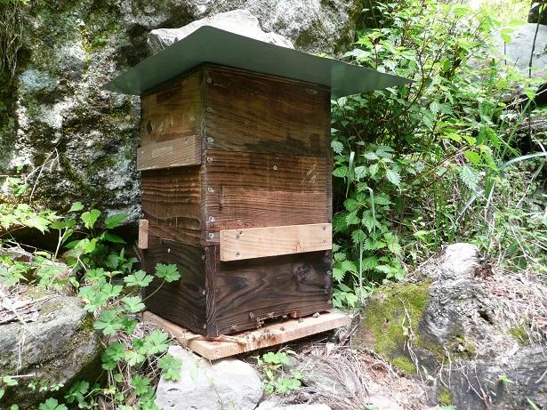 蜜蜂販売用 - コピー