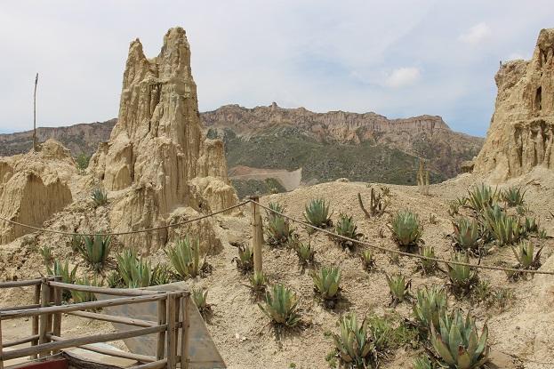 ボリビア・ペルー旅行:月の谷 サボテン2