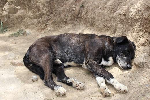 ボリビア・ペルー旅行:月の谷 犬