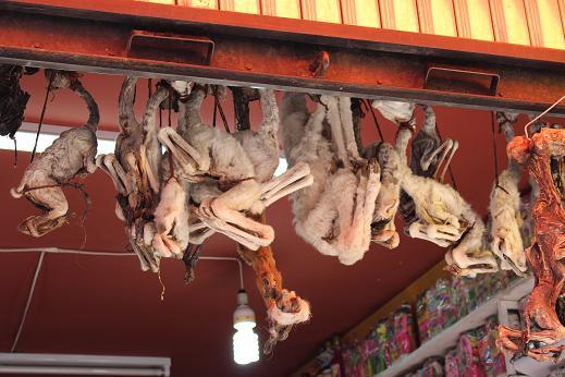 ボリビア・ペルー旅行:ラパス旧市街 魔女通り リャマのミイラ3