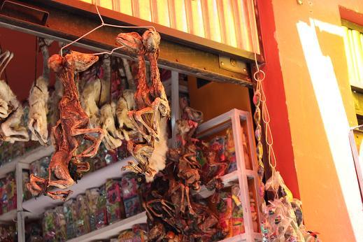 ボリビア・ペルー旅行:ラパス旧市街 魔女通り リャマのミイラ4