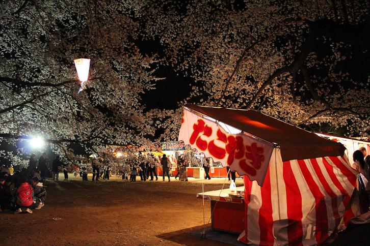 2014お花見:屋台 ソメイヨシノ