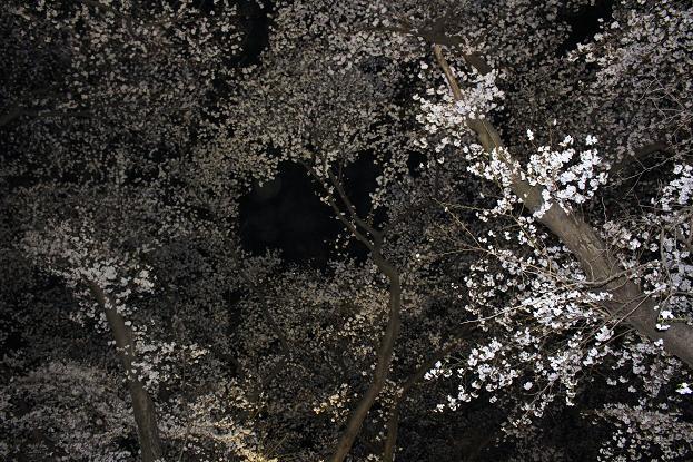 2014お花見:空 ソメイヨシノ