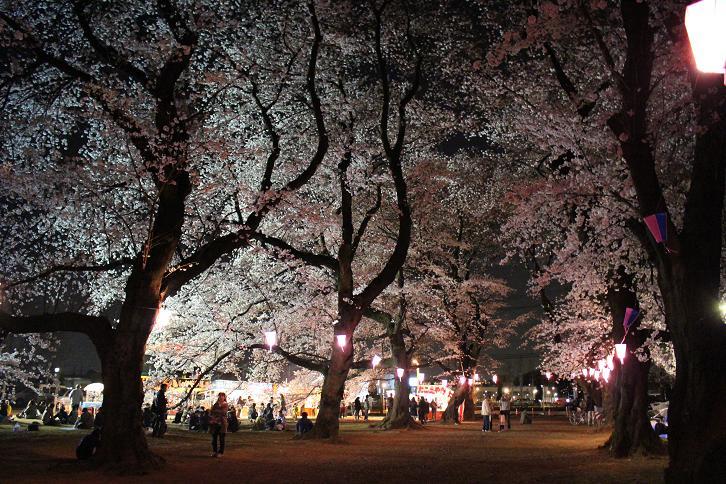 2014お花見:桜まつり ソメイヨシノ