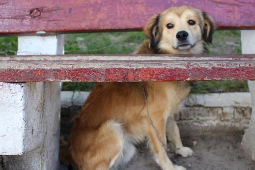 ボリビア・ペルー旅行:ウユニ塩湖 街中 ベンチ犬