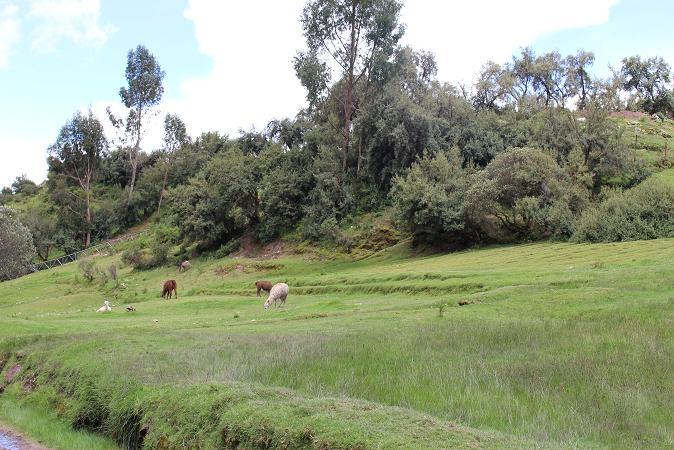 ボリビア・ペルー旅行:クスコ タンボマチャイ アルカパ