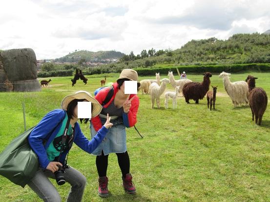 南米旅行:クスコ サクサイワマン アルパカ