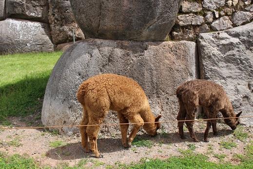 ボリビア・ペルー旅行:クスコ サクサイワマン アルパカ 子供 食事