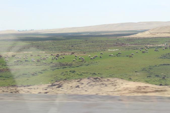 ボリビア・ペルー旅行:海岸砂漠3