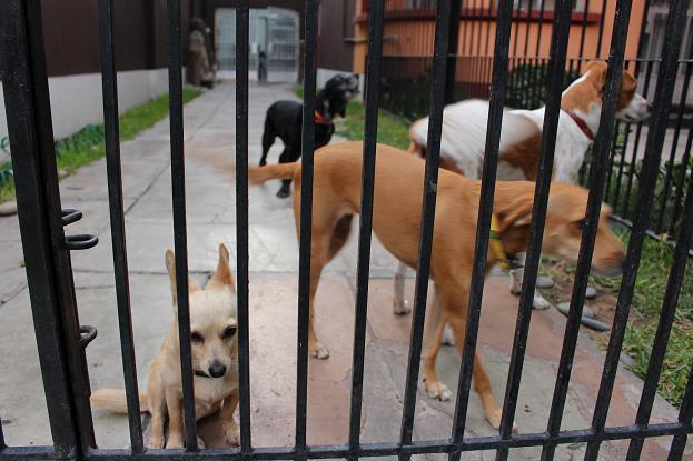 ボリビア・ペルー旅行:リマ サン・イシドロ 犬