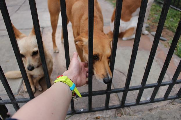 ボリビア・ペルー旅行:リマ サン・イシドロ 犬2
