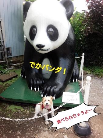 川越・でかパンダちゃん