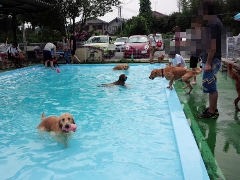 プールは大賑わい