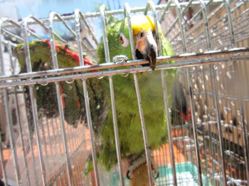 鳥さん5-17-1