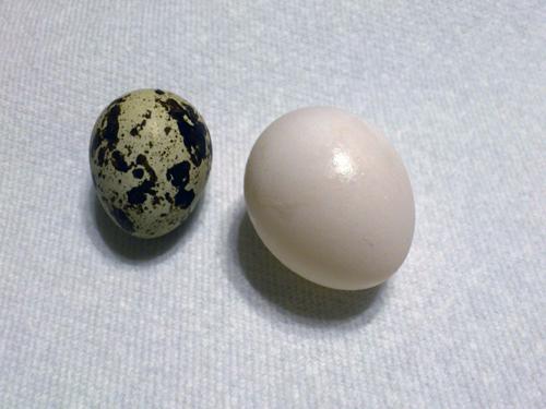 卵3個目6-8-3