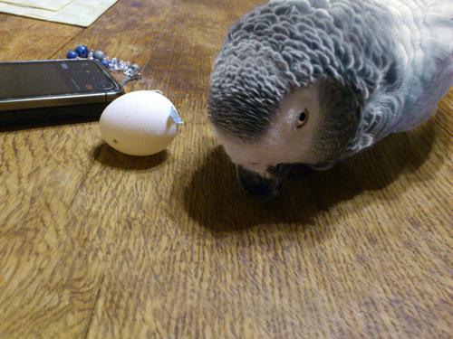 卵3個目6-8-1
