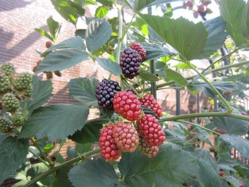 夏の庭6-24-5