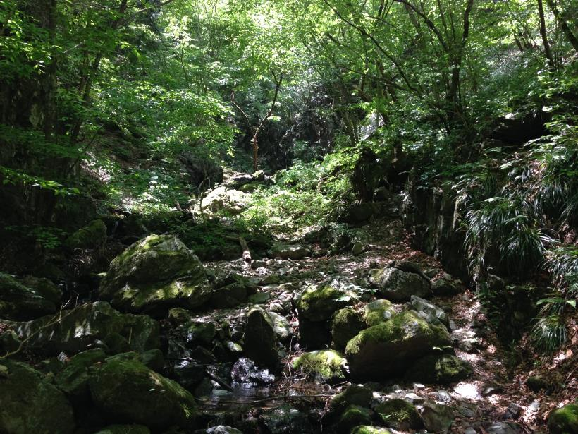 Gorge13.jpg