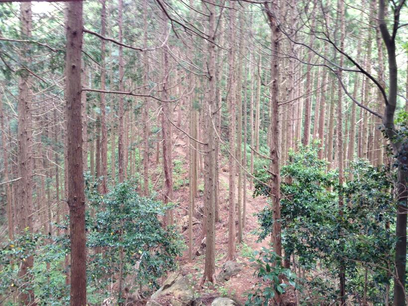 hirasakatobimura04.jpg