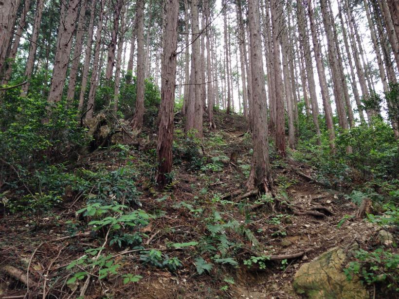hirasakatobimura08.jpg