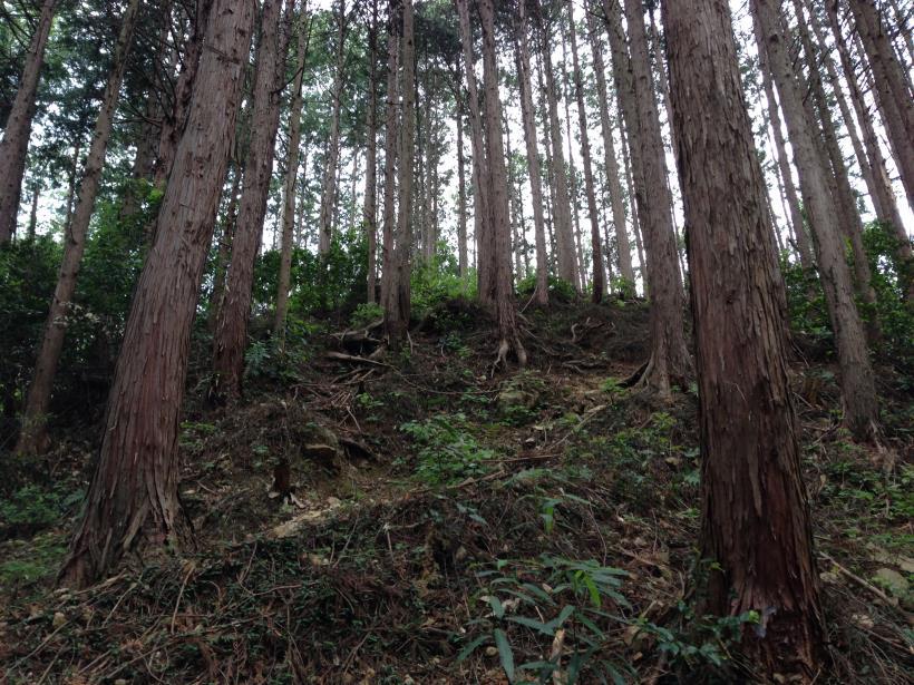 hirasakatobimura10.jpg