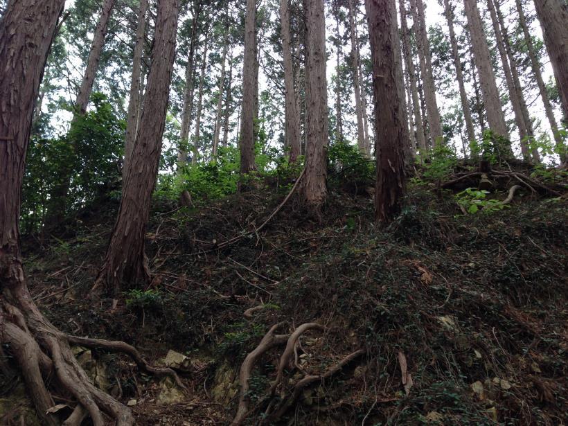 hirasakatobimura12.jpg
