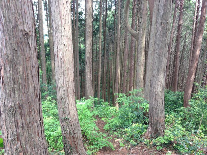 hirasakatobimura16.jpg