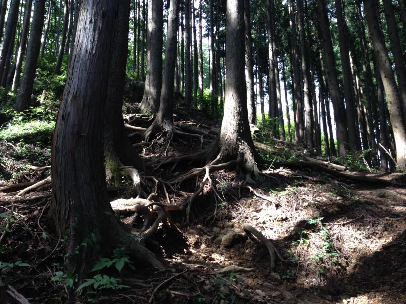 iwatakeishi29.jpg