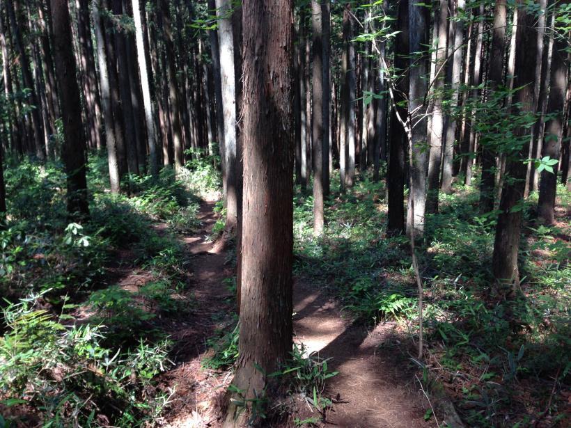 kawamatahe31.jpg