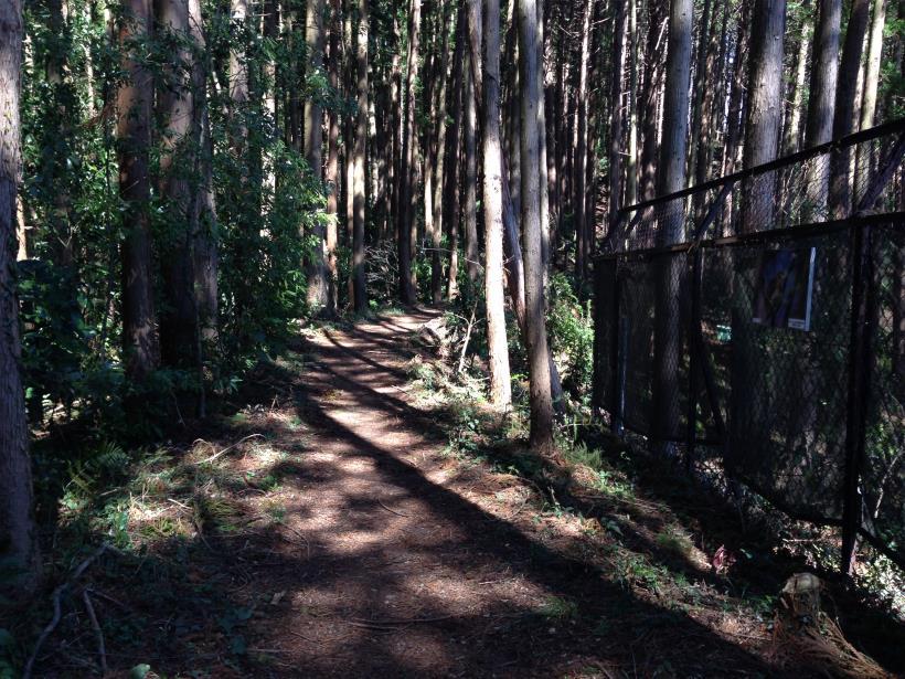 mabikizawa05.jpg