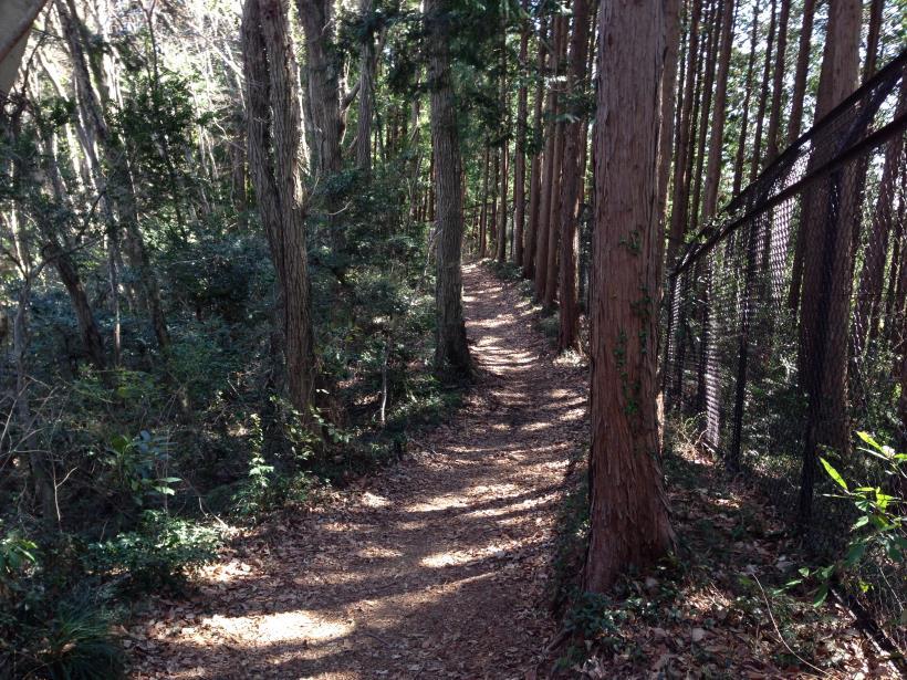 mabikizawa18.jpg