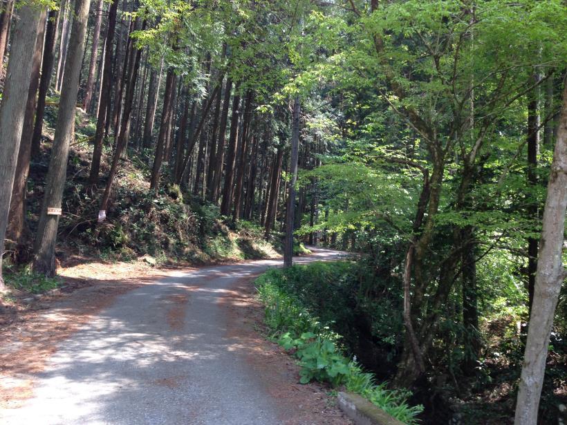 mtsukura09.jpg