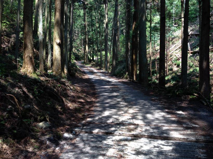 mtsukura19.jpg