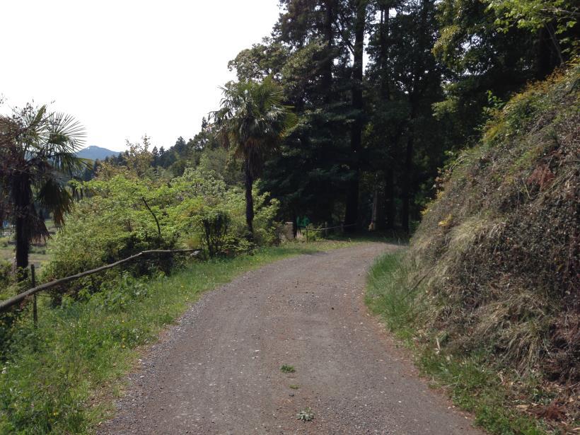 mtsukura27.jpg