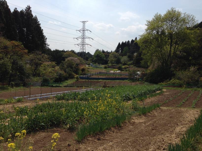 mtsukura33.jpg
