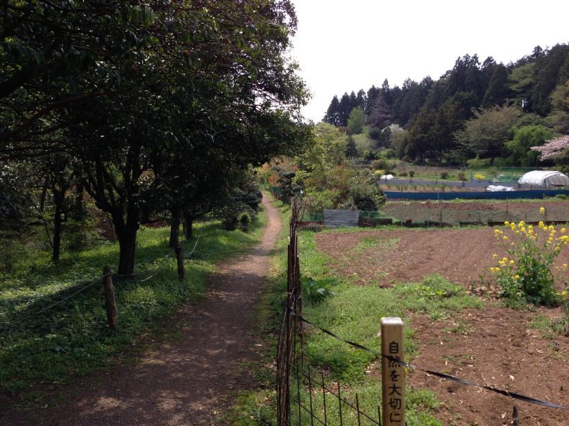 mtsukura34.jpg