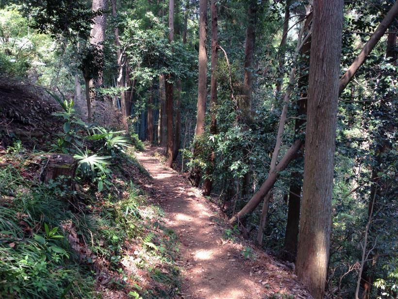 mtsukura36.jpg
