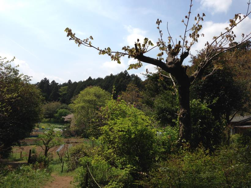 mtsukura38.jpg
