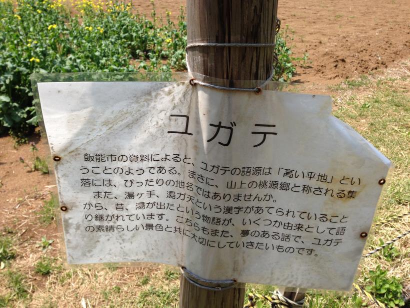 mtsukura41.jpg