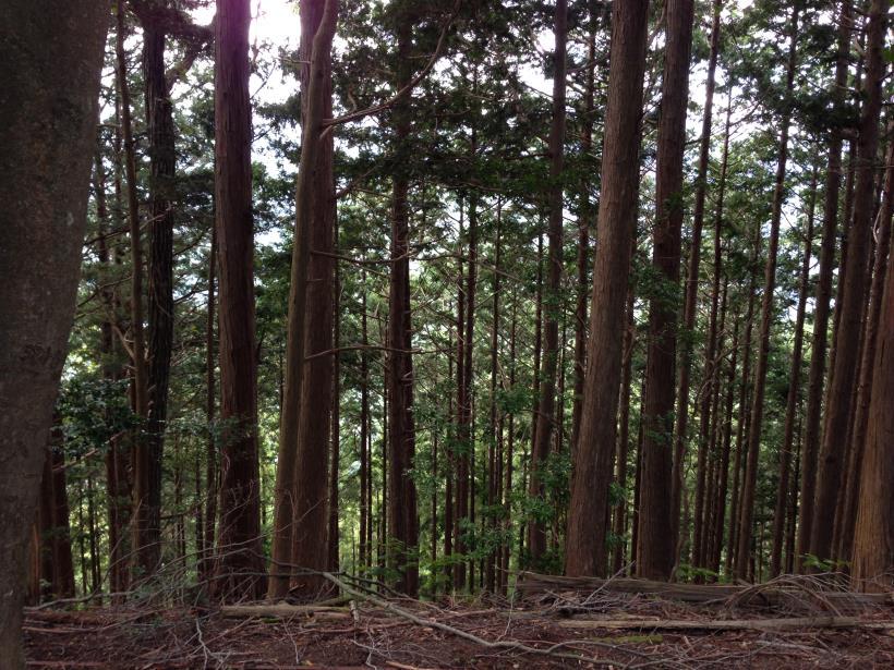 sougaku37.jpg