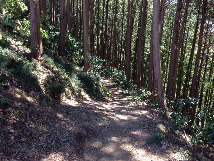 tenguiwa01.jpg