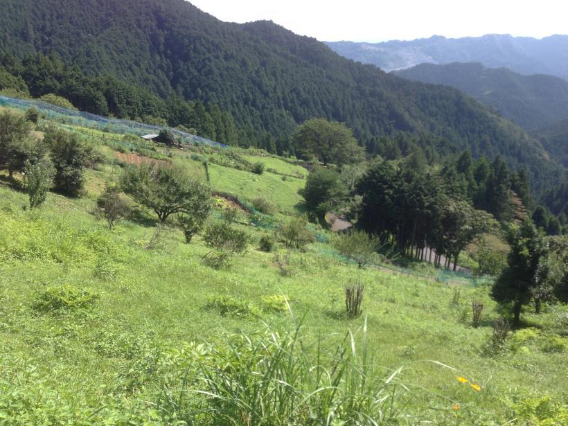 yatoku14.jpg