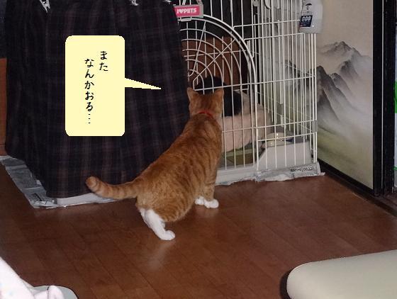 みぃ太子ネコ見学
