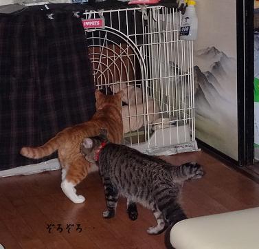 みぃ太&ボンちゃん子ネコ見学