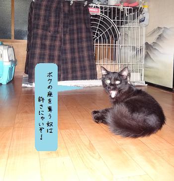 タガー子ネコ見学2