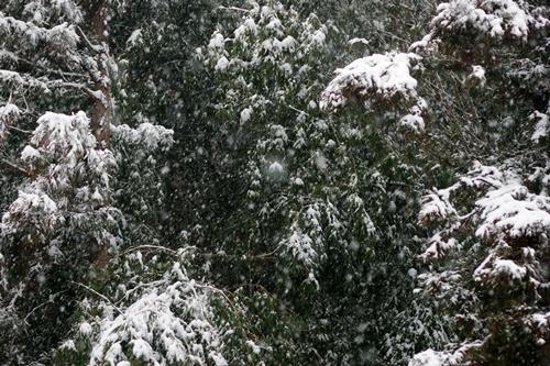 2014.2.8 大雪 (2)