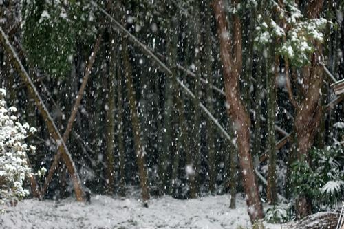 2014.2.8 大雪 (5)