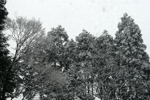 2014.2.8 大雪 (1)