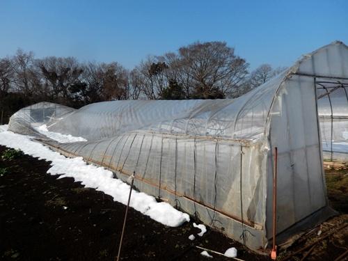 2014.2.21 大雪のハウス被害(林農園) 013 (5)
